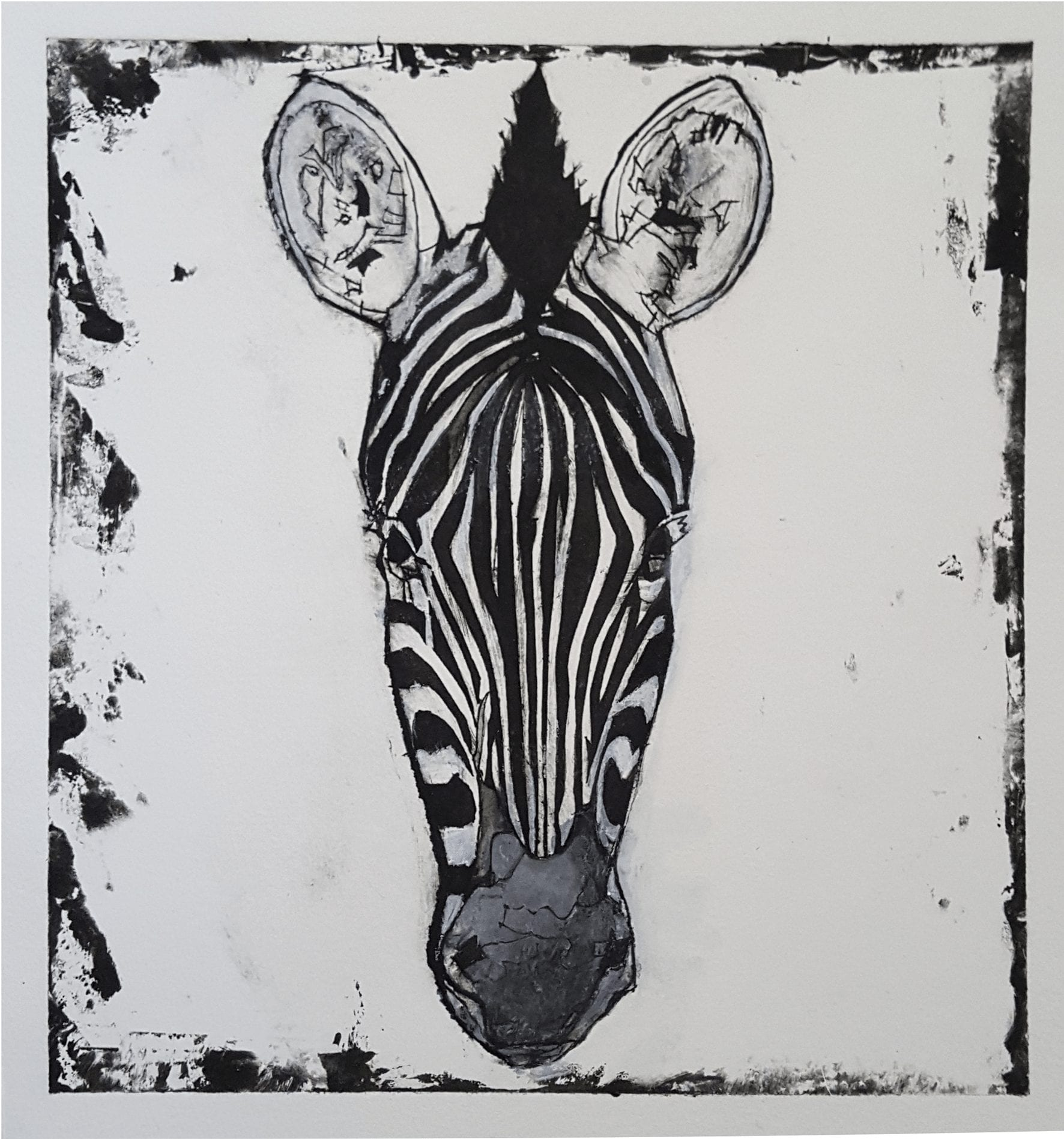 Zebra II, 24×26 cm